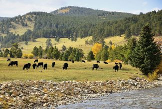 It's ranchers vs. the BLM in grazing allotment squeeze