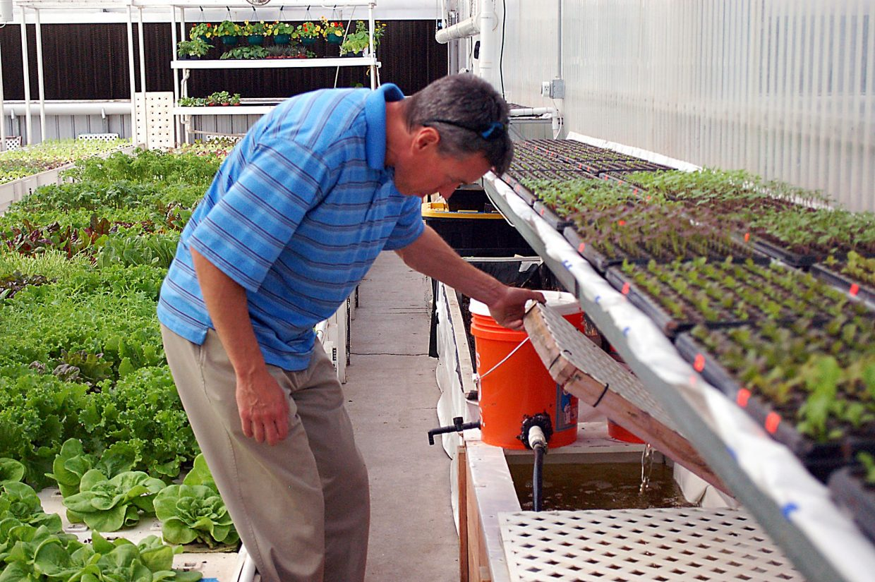 J.D. Sawyer lifts a lid to peek at some of the water running through the aquaponics system at The GrowHaus. Aquaponics combines aquaculture, the cultivation of fresh fish, and hydroponics, a soil-free growing system .
