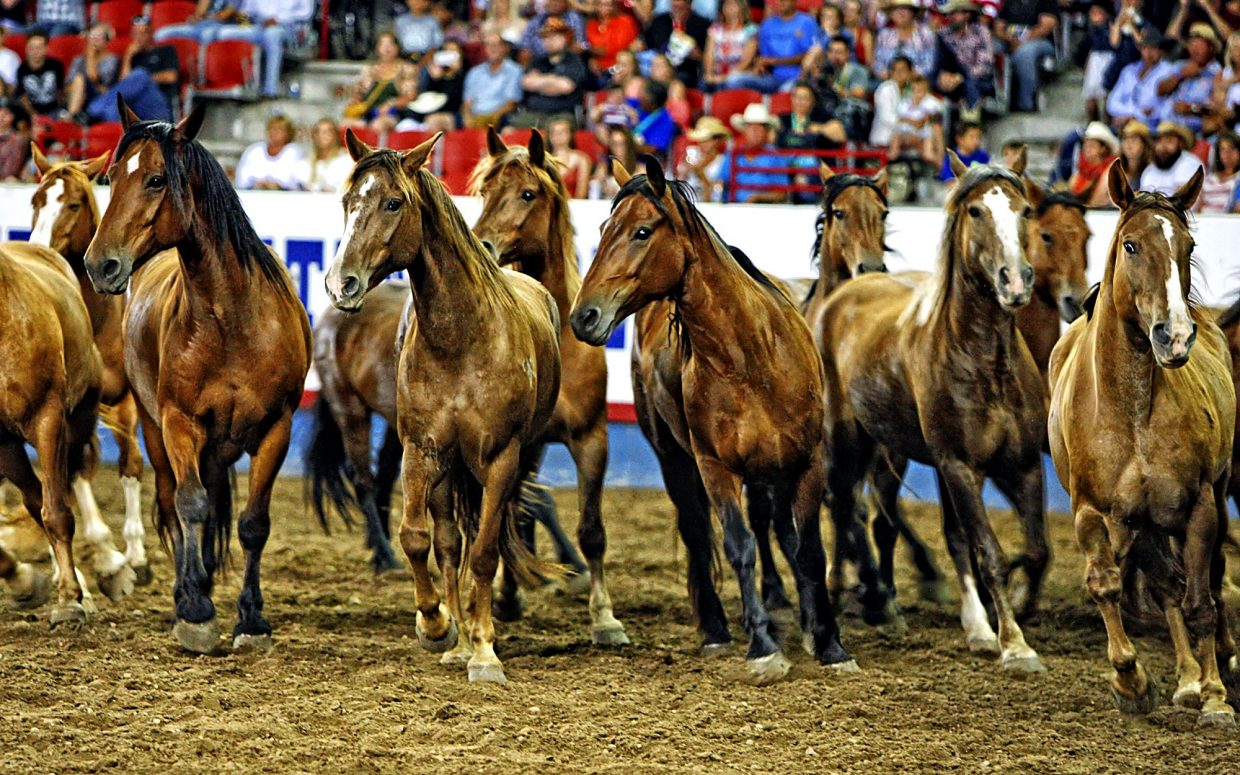 Beutler and Son Rodeo Company always delivers big, strong bucking horses to the Greeley Stampede, and they were on full display for the large crowd at the conclusion of the championship round.