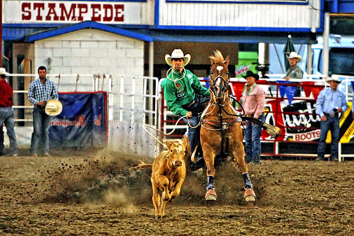 Louisiana cowboy Shane Hanche took home a share of the tie down roping title, with Cade Swor after his 9.3-second time in the championship round of the 2017 Greeley Stampede on July 3.