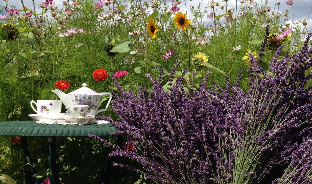 At Heritage Lavender in Berthoud, Colo., tea time can be enjoyed right among the growing beds.
