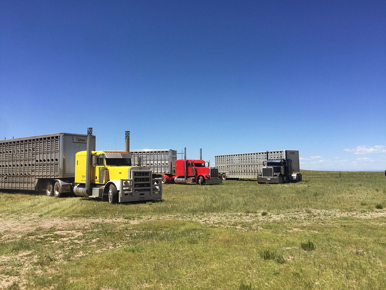 Livestock producers and feedlots are facing a trucker