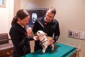 CSU seeks participants for canine cancer prevention vaccine study